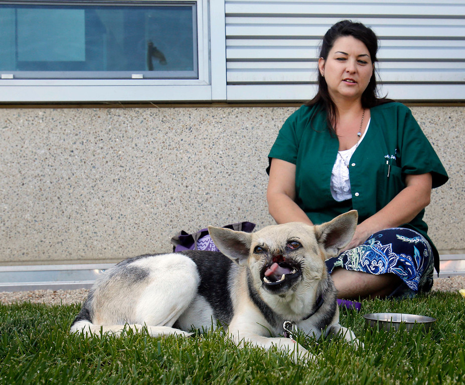 . Kabang, a two-year-old injured mixed breed, is photographed with her caregiver Dawn Gillette as she is released from the from the William R. Pritchard Veterinary Medical Teaching Hospital at the University of California, Davis, in Davis, Calif., Monday, June 3, 2013.  (AP Photo/Rich Pedroncelli)