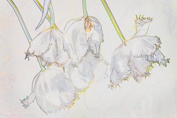Parrot Tulips Interpretation, 69