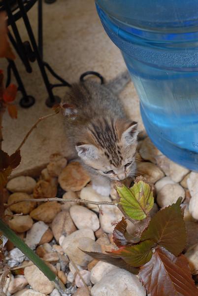 2007 04 12 - New Kitty 060.JPG