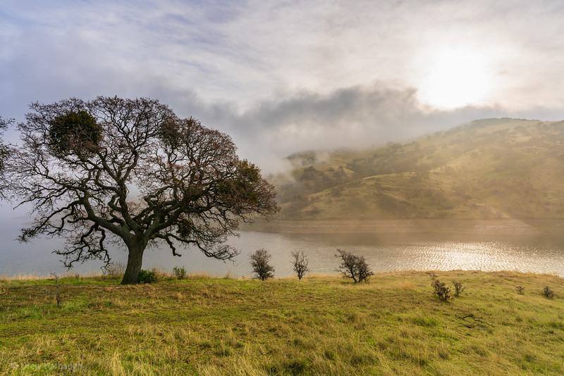 Misty Morning Oak