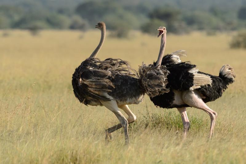 20160215__KET8369_Serengeti_Day_7.jpg