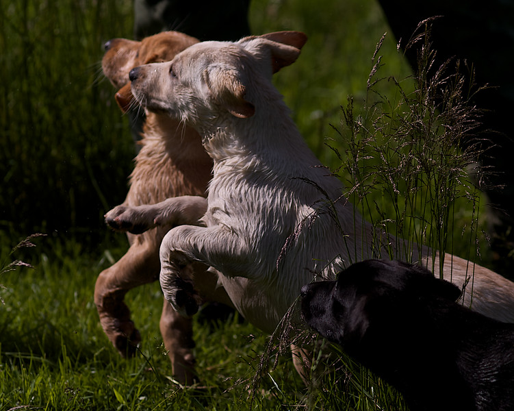Puppies 796.jpg