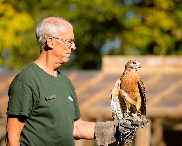Volunteer with Hawk in Training