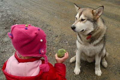 DAY 32 - February 1, 2011 - Please Just Throw the Ball! Cynthia Meyer - Tenakee Springs, Alaska
