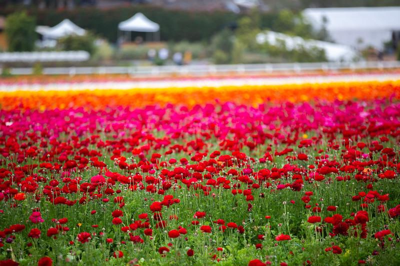 Spring Flowers B-338.jpg