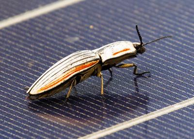 Click Bug