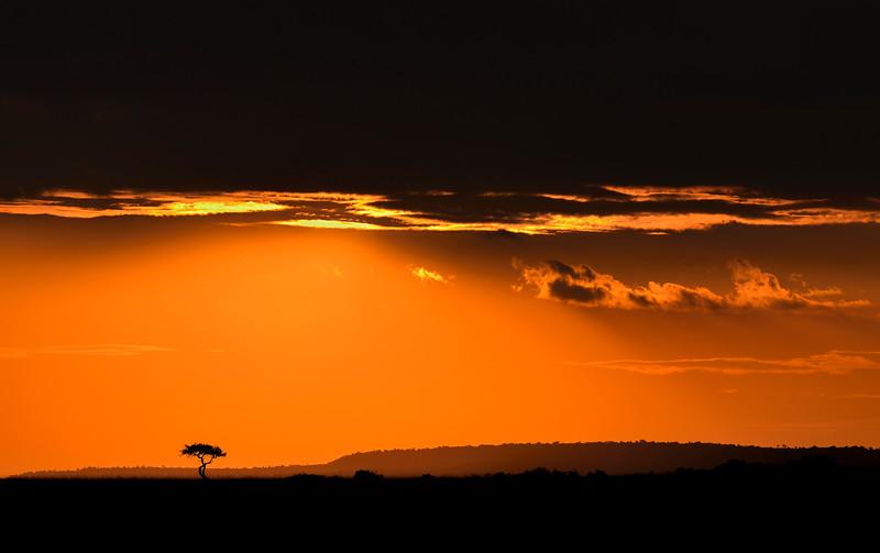 Sunrise-tree-masaimara.jpg