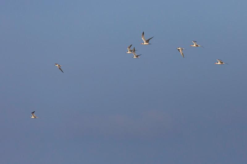 Pelagic Birding trip
