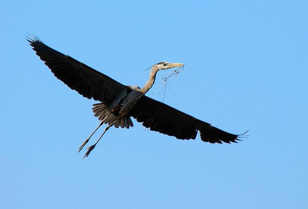 Heron Rookery Shoot 4/29