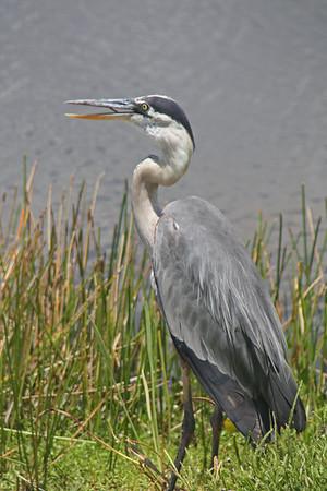 Florida May 2011