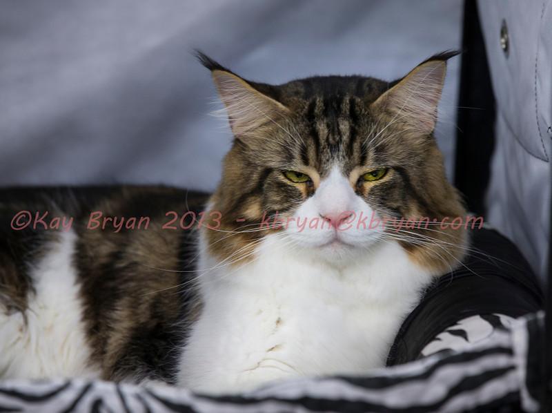 CatShow2014138.jpg