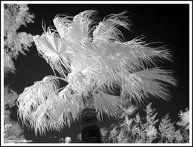 B&W and Infrared
