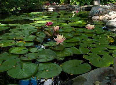 Pond and backyard