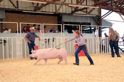 Market Swine 8