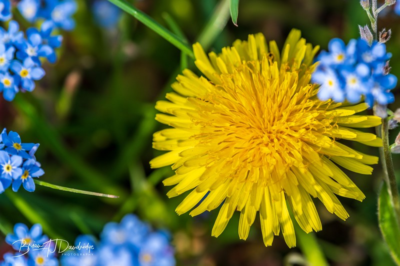 Garden flowers and insects-2500.jpg
