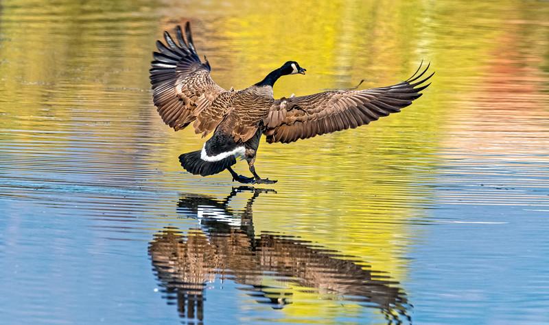 020040 Goose Landing 0090 16x9.jpg