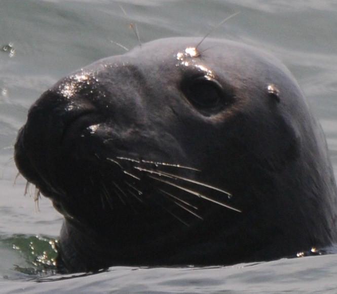 bird,seal,family 035.JPG
