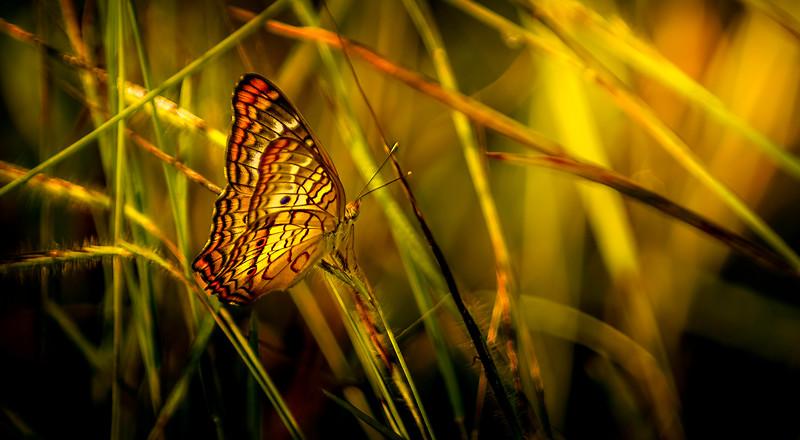 Butterfly-221.jpg