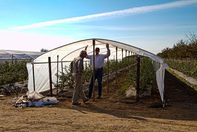 Augusta Bixler Farms - November 2010