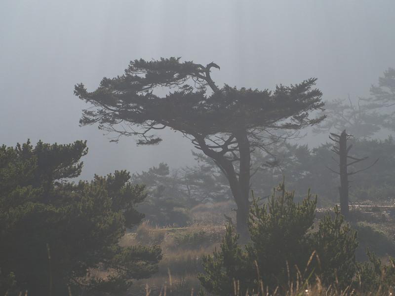 Fog swirls through the trees on Point Wilson