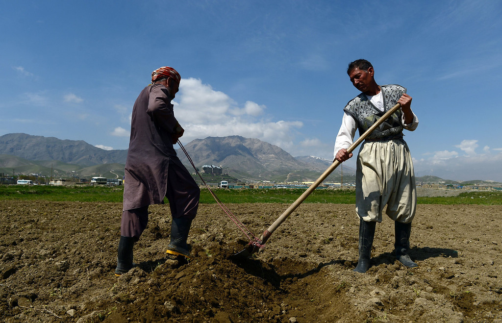 . Afghan laborers work on agricultural farmland west of Kabul on April 22, 2014. Afghanistan marks Earth Day on April 22 as the country struggles to stop the long-running process of deforestation caused by increased demand for timber and firewood. Soil erosion caused by deforestation often triggers floods in parts of the country and to cope with the problem, the government plants trees during spring every year - but maintaining them remains a mamoth task. AFP PHOTO/Wakil KohsarWAKIL KOHSAR/AFP/Getty Images