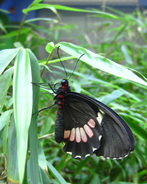 The Butterfly Gardens at the Long Island Aquarium & Exhibition Center.