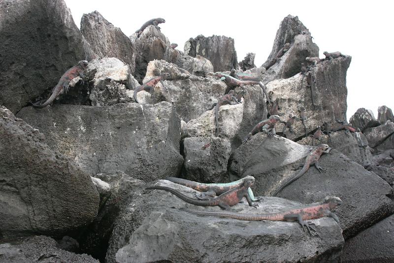 2007-02-19-0003-Galapagos with Hahns-Day 3, Espanola-Marine Iguanas.JPG