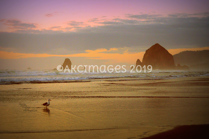 Oregon & Washington Coast