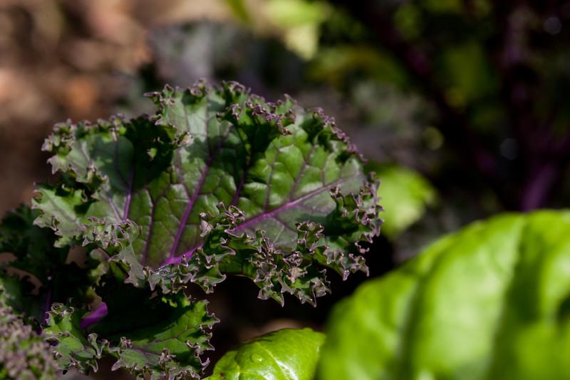 Julie's Garden-6317.jpg