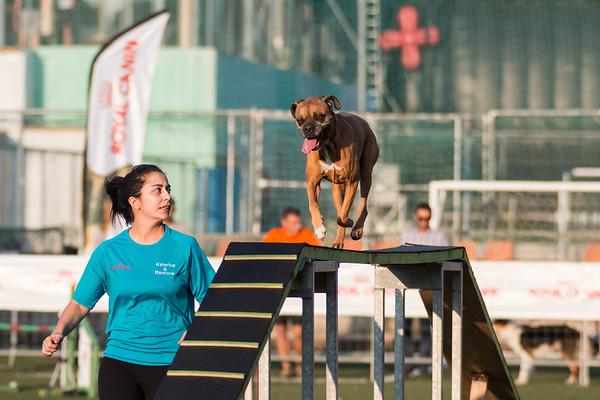 11-12 July 2015 Summer Agility Competition by Agility Addicts