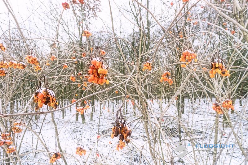 Natur_20190125_50.jpg