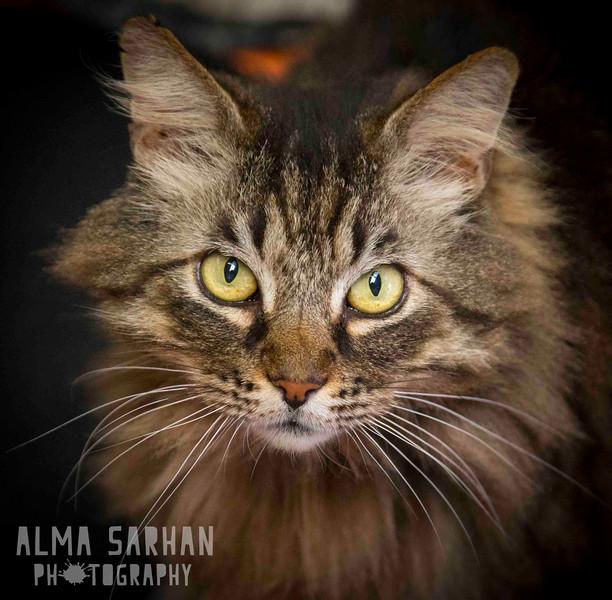 Alma_Sarhan-2756.jpg