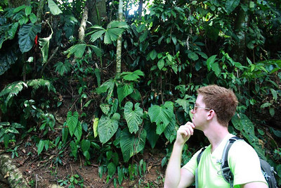 The Great Costa Rican Experience