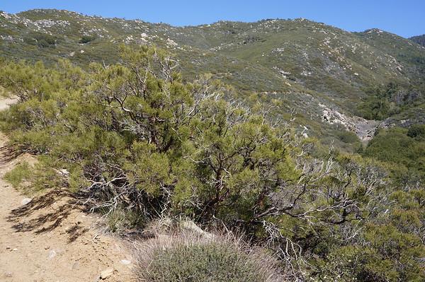 Toro Peak April 2013