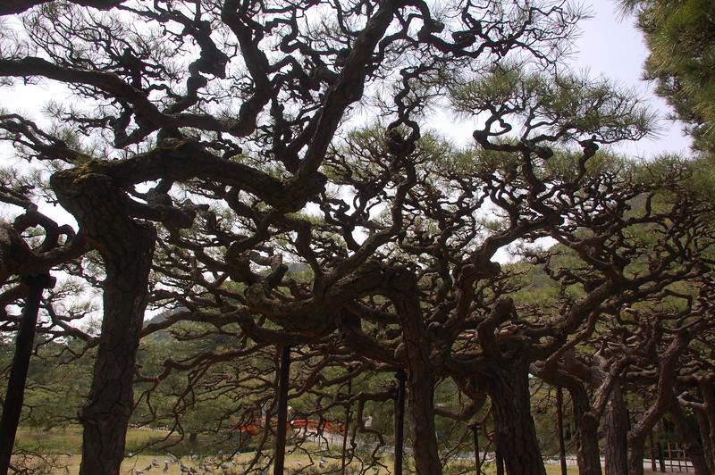 08-Japan2011_0411.JPG