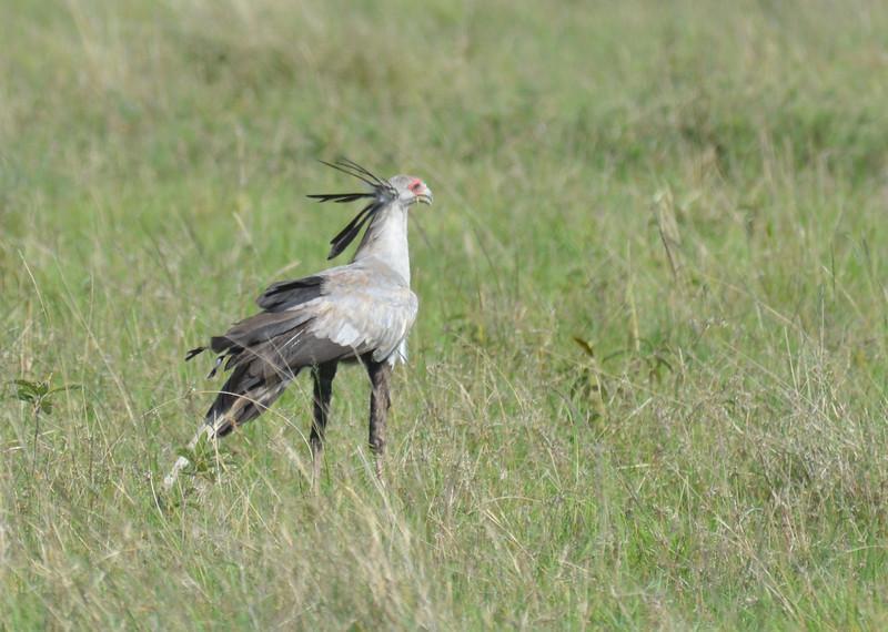 East Africa Safari 220.jpg