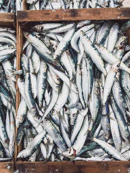 marseille fish market 11.jpg