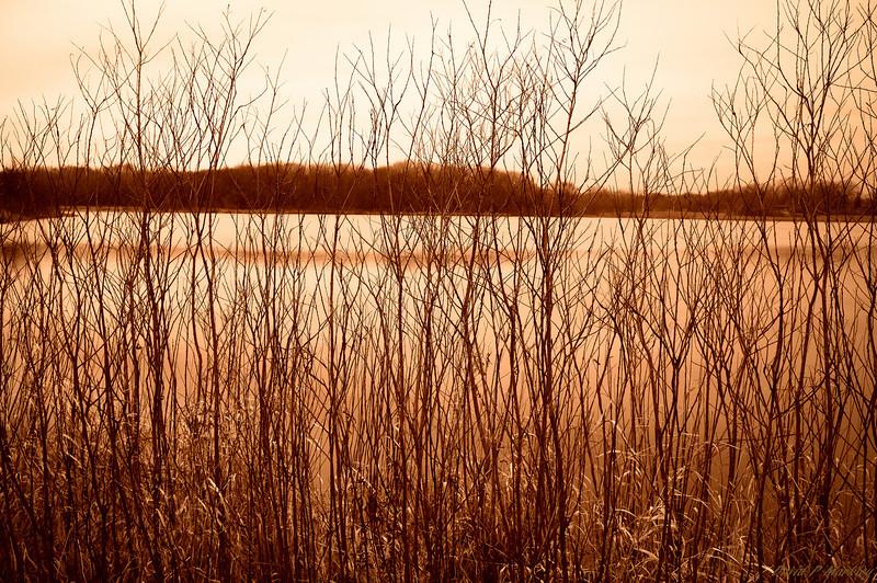 Lake Strands