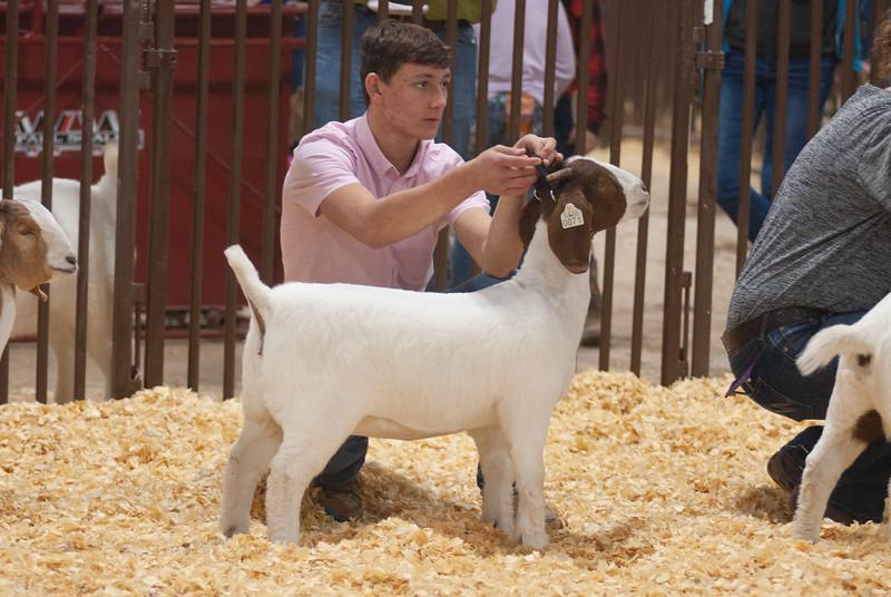 kay_county_showdown_goats_20191207-131.jpg