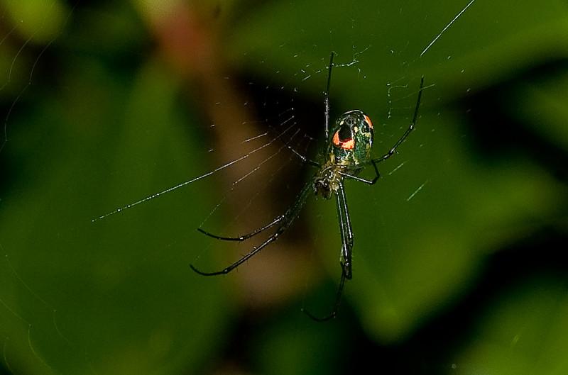 spider-9.jpg