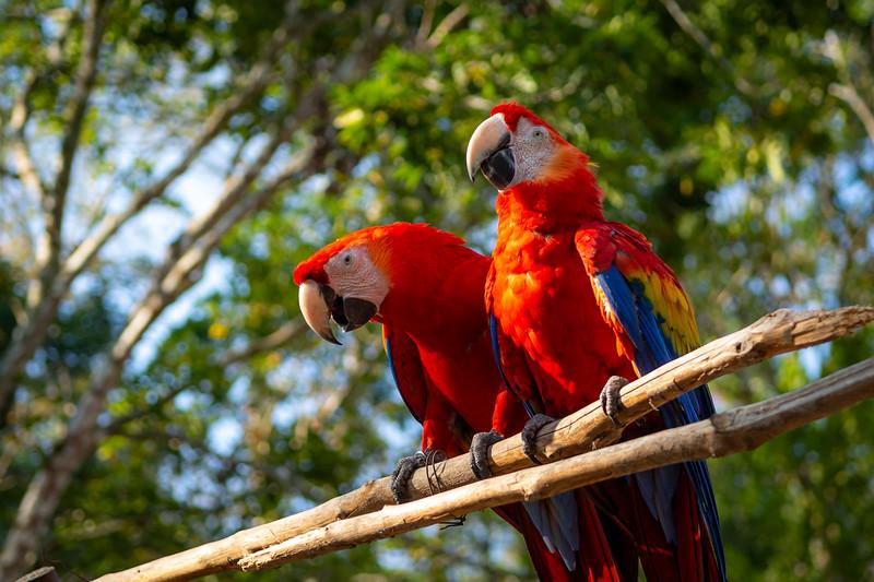 Honduras__DSC2888_Stephen Bugno.jpg