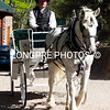 DANCIING DRAFT  HORSE CARRIAGES.