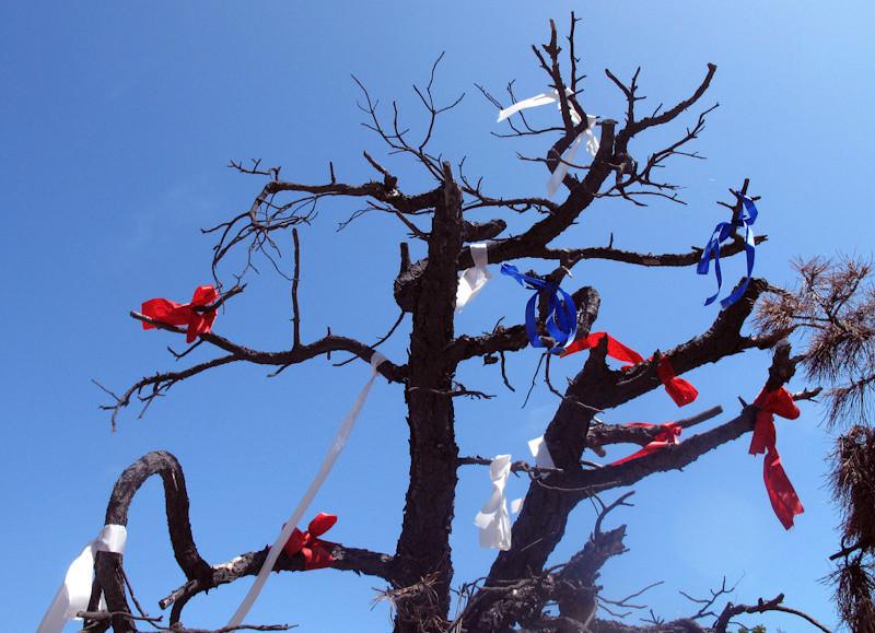 jul6_tree.jpg