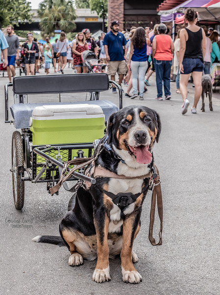 Pup wagon.jpg