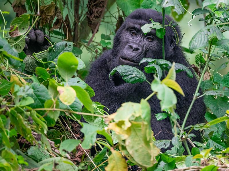 Uganda_T_Gor-2193.jpg
