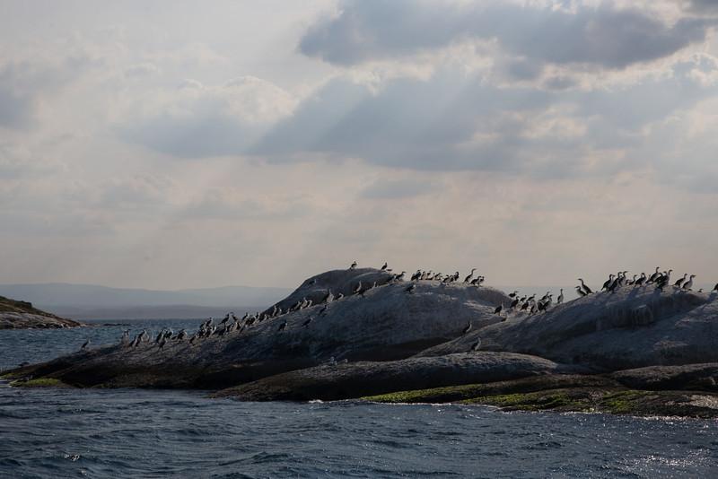 Cormorant Island