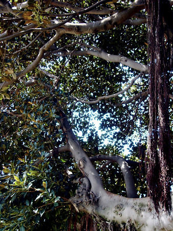 SPRING'S TREELINE TAPESTRIES