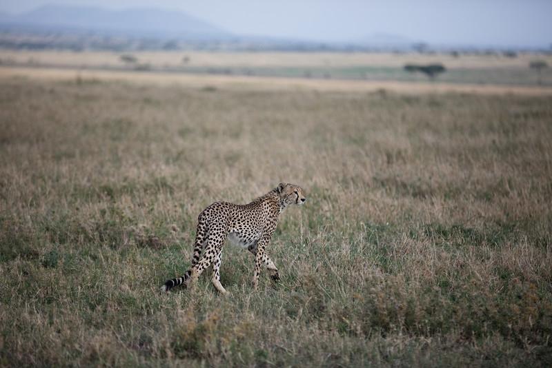 Africa - 101616 - 3924.jpg