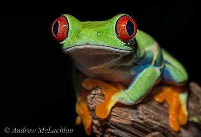 Frogs & Salamanders