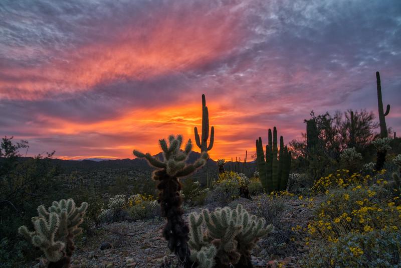 Organ Pipe Cactus 2020-6.jpg